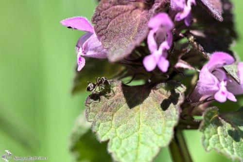 Macro shot of an ant on a tiny plant / Makroaufnahme einer Ameise auf einer kleinen Blume